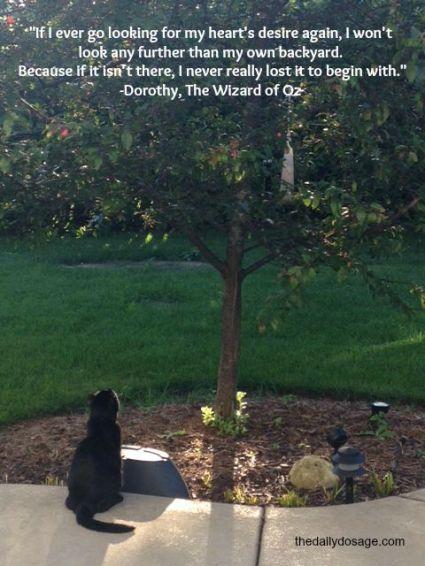 dorothy backyard